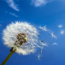 allergy-allergies-doctor-ny